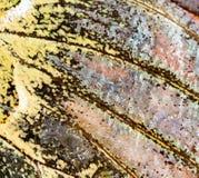 Rysunki na skrzydle motyl jako tło Zdjęcie Royalty Free