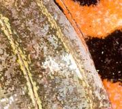 Rysunki na skrzydle motyl jako tło Zdjęcia Stock