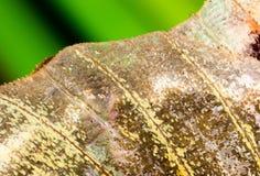 Rysunki na skrzydle motyl jako tło Obraz Stock