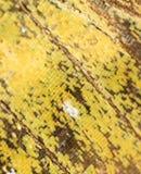 Rysunki na skrzydle motyl jako tło Zdjęcia Royalty Free