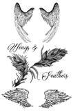 Rysunki skrzydła i piórka Zdjęcia Stock