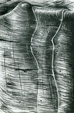 rysunkowa skorupa Zdjęcie Royalty Free