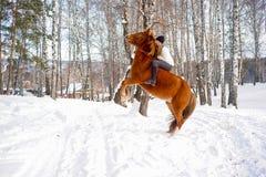 rysunkowej dziewczyny końskie jeździeckie serie vector zachodni dzikiego obrazy stock