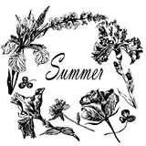 Rysunkowej ramy wianek lato kwiatów irysy, róże i łąkowe trawy, nakreślenie pociągany ręcznie ilustracja ilustracji
