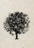 Rysunkowy drzewny klon na beżowym ryżowym papierze Czarna sylwetka na beżowym ryżowym papierze Zdjęcie Stock