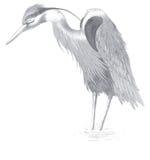 rysunkowy egret Zdjęcia Stock