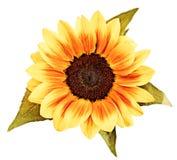 rysunkowy słonecznik royalty ilustracja