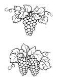 Rysunkowy winograd i liście Zdjęcie Stock