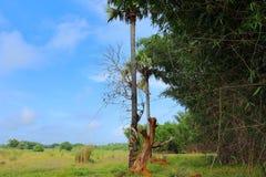 Rytmträd och härlig viewof himlen royaltyfri fotografi