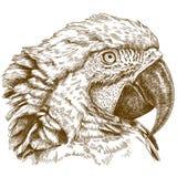 Rytownictwo ilustracja ary głowa Obrazy Stock