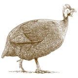 Rytownictwo ilustracja guineafowl royalty ilustracja