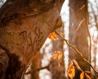 Rytownictwo na drzewie w spadku obrazy royalty free