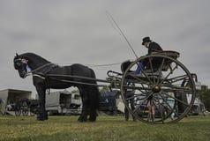Ryttare för perioddräkt med Frisianvagnshästen Arkivbilder
