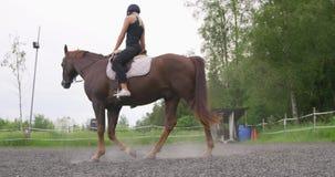 Ryttare för ung kvinna på hennes arabiska häst på lantgården stock video