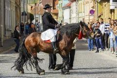 Ryttare på brun dray-häst Royaltyfria Bilder