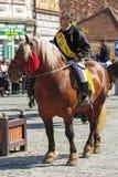 Ryttare på brun dray-häst Arkivbild