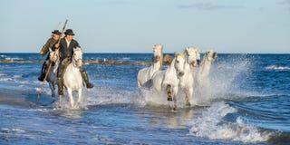 Ryttare på den vita hästen kör hästarna till och med vattnet royaltyfria foton