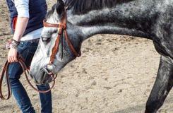 Ryttare på en häst Fotografering för Bildbyråer