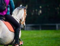 Ryttare på en häst Royaltyfri Fotografi