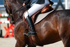 Ryttare på en sportive häst Royaltyfri Fotografi