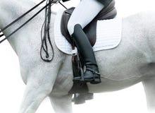 Ryttare på en vit häst Royaltyfri Foto