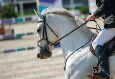 Ryttare på en vit häst Royaltyfri Bild