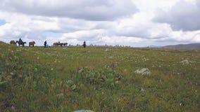 Ryttare på hästrygg gem Sommar betar i en intermontane dal Folk på hästrygg i grön äng royaltyfri fotografi