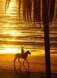 Ryttare på hästrygg på stranden Arkivbild