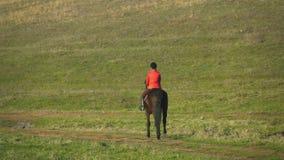 Ryttare på hästryggpromenader längs ett grönt fält tillbaka sikt långsam rörelse stock video