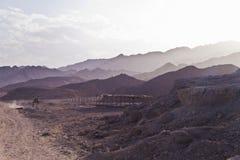 Ryttare på kamlet i berg på den Sinai halvön Royaltyfri Fotografi