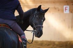 Ryttare på hästen Arkivbild