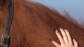 Ryttare som att bry sig för en häst långsam rörelse close upp stock video
