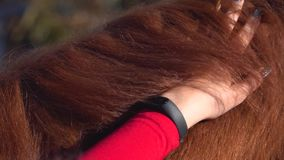 Ryttare som att bry sig för en häst långsam rörelse close upp arkivfilmer