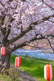 Lantern with Cherry blossoms, Tokyo, Japan. stock photography