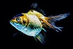 Ryvkin Goldfish Illustration Isolated On Black Stock Images