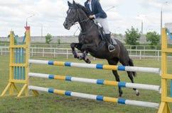 Rywalizacje w equestrian sporcie z pokonywanie przeszkodami Obraz Royalty Free