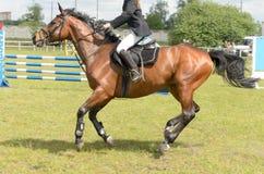 Rywalizacje w equestrian sporcie z pokonywanie przeszkodami Zdjęcia Royalty Free