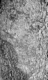RYZYKO wylesienie Obrazy Stock