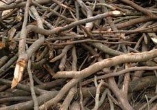RYZYKO wylesienie Zdjęcie Stock
