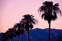 Rząd drzewka palmowe i pustyni góry w Coachella Dolinny Pobliski palm springs zdjęcia royalty free