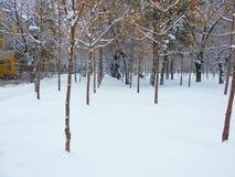 Rząd MALI drzewa W BIAŁYM śniegu obraz royalty free