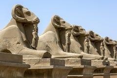 Rząd baran statuy przy enterance Karnak świątynia w Luxor, Egipt Fotografia Stock