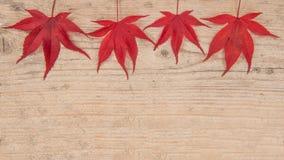 Rząd cztery czerwonego liścia klonowego na drewnie Obrazy Royalty Free