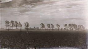 Rząd drzewa na chmurnym dniu w rocznika krajobrazie zdjęcia stock