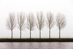 Mgłowi drzewa Obrazy Stock