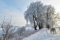 Rząd drzewa w śniegu. obrazy stock