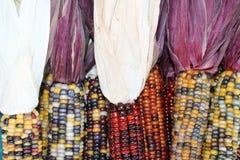 Rząd Indiańska kukurudza Fotografia Stock