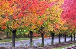 Rząd jesień drzewa obraz royalty free