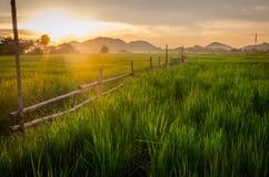 Rząd płotowy bambus Fotografia Stock