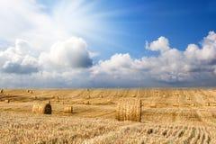 Rząd słoma bele na polu, rolniczy krajobraz Zdjęcie Royalty Free